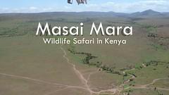 """The Big Five of Africa"" - Amazing Wildlife Safari in Masai Mara, Kenya 2019 (4K-Video) (Markus Trachsel) Tags: wildlife safari masai mara national park kenya animal bird africa"