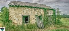 Abandon (https://pays-basque-et-bearn.pagexl.com/) Tags: aquitaine béarn colinebuch france jurançon sudouest vigne domaine montagne nature nuages paysage pyrénées pyrénéesatlantiques