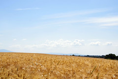 céréales (Frank S (aka Knarfs1)) Tags: céréales france frankreich provence landschaft landscape nature natur landwirtschaft farming farm