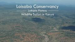 """""""Pearls of the Plains"""" - Amazing Wildlife Safari in Loisaba Conservancy, Laikipia Kenya 2018 (4K-Video) (Sandra und Markus Trachsel) Tags: loisaba laikipia kenya africa wildlife safari animal bird"""
