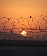 Sparrow and the Sun (hunter.mayo) Tags: afghanistan middleeast desert sunset sky bird birds avian landscape skies canon canon7d