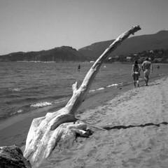 Summertime - Orbetello (Tuscany) -  July 2019 (cava961) Tags: orbetello tuscany feniglia analogue analogico monochrome monocromo bianconero bw 6x6 rolleiflex
