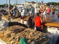 Basking in the sun . . . (ericrstoner) Tags: veropeso baíadoguajará guajará belém pará driedfish peixeseco fish peixe boat barco market feira