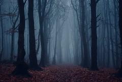 Magical (Hulalulatallulahoop74) Tags: trees mist rivington lancashire mystical misty nikond80