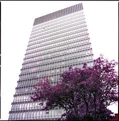 shef (steve-jack) Tags: hasselblad 501cm 50mm cfi lomochrome purple xr 100400 lomo lomography film 120 6x6 medium format tetenal c41 kit epson v500
