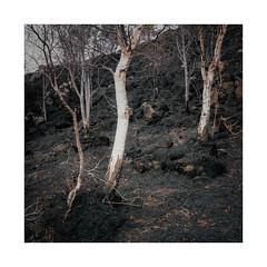 Birch & Burn (gerainte1) Tags: birch burn slagganbay torridon scotland film colour portra160 hasselblad501