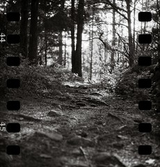 Forest path (Geir Bakken) Tags: yashica yashica44 blackandwhite forest sprocket backlit analog analogue analogphotography film filmisnotdead filmphotography filmcamera filmisalive nature larvik norway