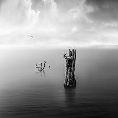 Pelican on Trunk - bw (George Nevrela) Tags: treetrunk deadtrunk trunk baum baumstamm meer ocean water wasser pelikan pelican gebirge toterstamm bw sw bnw schwarz black gray shadesofgray fineart art nevrelageorgenevrela mountains white digitalart