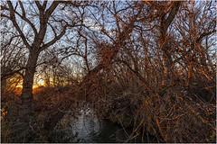 Entramado de ramas, a contraluz, sobre el río Jalón (Fernando Forniés Gracia) Tags: españa aragón zaragoza berbedel ríojalón atardecer puestadesol sunset paisaje landscape