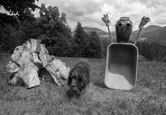 RUMPELSTILTSKIN . RUMPELSTILZCHEN (LitterART) Tags: rumpelstilzchen rumpelstiltskin redridinghood littleredridinghood schubkarre scheibtruhe barrow wheelbarrow märchen toys fairy fairytales fx nikond800 steiermark österreich country münsterländer jagdhnd dog huntingdog monochrome