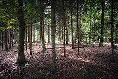 Waldruhe - Sony RX0II (Andreas Voegele) Tags: sony sonyrx0m2 sonyrx0ii rx0m2 rx0ii andreasvoegelephoto landscape forest wald waldruhe