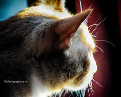 Magic Sunbeam (Photographybyjw) Tags: magic sunbeam old man loves fresh his face he is enjoying this one found north carolina ©photographybyjw window door sun cat feline rural country