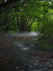 the fog on the water (murozo) Tags: fog mist water river green tree beech forest summer nikaho shishigahana akita japan 霧 水 川 緑 木 森 ブナ 夏 獅子ヶ鼻湿原 にかほ 秋田 日本