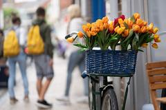 Blue Basket. Blooms. Bike. (jillyspoon) Tags: bike bicycle bluebasket blueandyellow tulips york northyorkshire dof depthoffield city streetphotography sony sonyalpha sonya7iii sony85mm