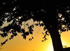 a sunny day (Ruby Augusto) Tags: silhuetas silhouettes tree árvore sunset pôrdosol socorrosp