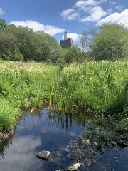 Yonder Castle - Dromore Wood / Lake - County Clare, Ireland (firehouse.ie) Tags: wood ireland lake castle castles nature clare eire roi countyclare dromore fauna reeds flora