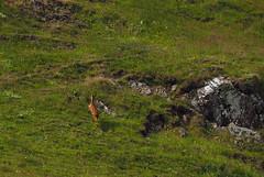 st abbs head nature reserve (Johnson Cameraface) Tags: 2019 june summer olympus omde1 em1 micro43 mzuiko 40150mm f40f56r johnsoncameraface stabbshead scotland naturereserve nationaltrustforscotland walking holiday