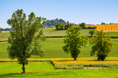 Girasoli nel Monferrato (bluestardrop - Andrea Mucelli) Tags: monferrato piemonte girasoli sunflowers