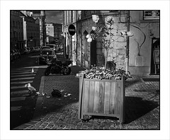 Garbage birds (jeanseb1971) Tags: sonya7riii street streetphotography caen blackandwhite monochrome normandie normandy