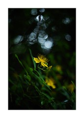 This work is 6/12 works taken on 2019/6/8 (shin ikegami) Tags: light shadow art nature japan photography iso800 tokyo photo asia photographer bokeh earth sony voigtlander depthoffield 40mm 自然 nokton naturephotography ndfilter 単焦点 nokton40mmf14sc s7ii 玉ボケ ilce7m2 sonyilce7m2