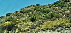 DSC01942 (jhk&alk) Tags: losangeles hillside