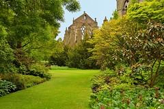 Edinburgh / Palace of Holyroodhouse / Private Garden / Holyrood Abbey (Pantchoa) Tags: édimbourg ecosse holyroodabbey holyrood jardin abbaye nature gazon arbres ruines pierres vielles chemin privé cloître david 1128 palaceholyroodhouse