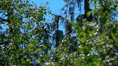 Stump (blazer8696) Tags: 2019 brookfield ct connecticut ecw hdr img131012deep obtusehill t2019 tabledeck usa unitedstates gone tree