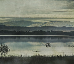 young lovers (jssteak) Tags: colorado lake morning sunrise mountains ducks clouds foothills trees reflection