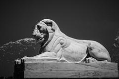 Belle Isle Fountain - Lion (Tony Rich Photography) Tags: michigan belleisle gem emerald statepark detroit marble sculpture