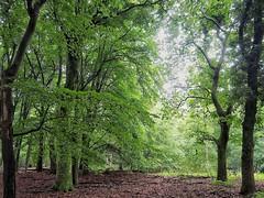 Leuvenumse bos (Jenne Barneveld) Tags: trees tree forest magicalforest magiclight holland veluwe gelderschlandschap gelderland woods walking morningwalk olympusem10 happydays