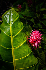 Belle Isle Conservatory - Large Leaf (Tony Rich Photography) Tags: michigan belleisle gem emerald statepark anna scripps whitcomb conservatory detroit plant