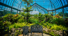Belle Isle Conservatory - Tropical Garden (Tony Rich Photography) Tags: michigan belleisle gem emerald statepark anna scripps whitcomb conservatory detroit