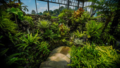 Belle Isle Conservatory - Tropical Garden 2 (Tony Rich Photography) Tags: michigan belleisle gem emerald statepark