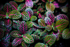Belle Isle Conservatory - Vibrant Leaves (Tony Rich Photography) Tags: michigan belleisle gem emerald statepark anna scripps whitcomb conservatory detroit