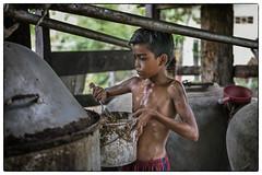 Cambodia, Kratie - Rice Whiskey family (Mio Cade) Tags: ricewhiskey whiskey rice brewing boy grandpa man elderly tradition culture skill inherit hot humid sweat kid child cambodia kratie asia documentary reportage mediumformat