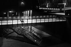 the lost dog (heinzkren) Tags: schwarzweis blackandwhite biancoetnero noiretblanc monochrome urban dog hund treppe stairs light night railing contemporary modern architektur architecture city vienna wien austria building geländer animal pet sony stairway outdoor composing
