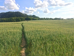 Primitive walking track through the field on a sunny summer evening (sunsju) Tags: landscape summer country field sky track pathway