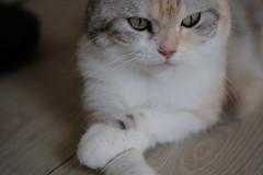 Tatami (冰冷熱帶魚) Tags: fujifilm xpro2 xf50mm digital cat tatami