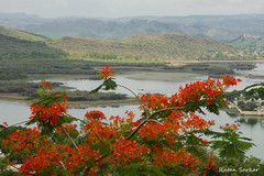 Lake Pichola (Ratan Sarkar) Tags: lake water flower red green udaipur rajasthan india nikond7100 hills mountain aravalli