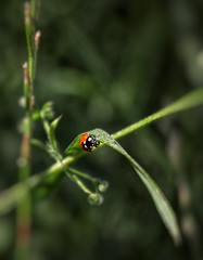 Spot the Ladybird. (Darren Speak) Tags: bugslife natural nature canoneosm50 ladybird