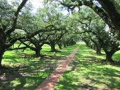 Oak Alley Plantation (kenjet) Tags: oak tree trees oaktree plantation louisiana south southern westbank oakalley oakalleyplantation vacherie stjamesparish canopied frenchallee green path pathway