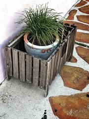 Sidewalk Potting (LarryJay99 ) Tags: street urban publicspace florida lakeworth