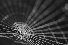 The Trap... (Jess Feldon) Tags: blackandwhite macro mono dof bokeh web spidersweb macromondays jessfeldon patternsinnature abstract hmm