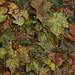 Calçadas cobertas de folhas