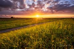 Summer Glow (Ellen van den Doel) Tags: grass spring natuur netherlands nature mei nederland outdoor goeree landschap gras portfolio1 zonsondergang lente voorjaar overflakkee 2019 landscape field dirksland zuidholland