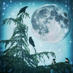 Blue Moon Rising (1crzqbn) Tags: 1crzqbn crows birds moon sliderssunday textures outside innamoramento