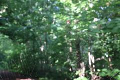 419A2461 (davekremitzki) Tags: lincoln memorial garden springfield illinois