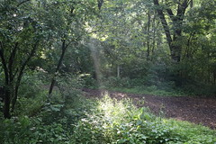 419A2443 (davekremitzki) Tags: lincoln memorial garden springfield illinois
