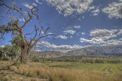 Beautiful Utah (Michael F. Nyiri) Tags: ordervilleutah utah tree sky