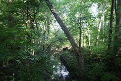 419A2495 (davekremitzki) Tags: lincoln memorial garden springfield illinois